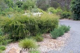 australian native plants nursery native plant nursery sydney north best nursery 2017