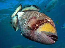 blue sea divers u2013 sites
