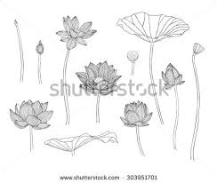 lotus leaf stock images royalty free images u0026 vectors shutterstock