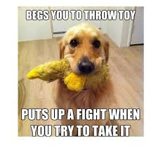 Cute Pet Memes - dog memes funny pictures with dogs and puppy