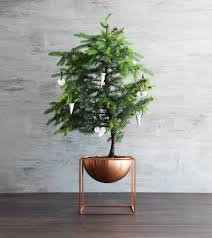 kubus bowl in copper is perfect for christmas plants christmas