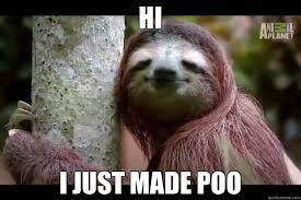 Funny Sloth Pictures Meme - content sloth memes quickmeme