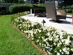 Gardenias by Gardenia Hedge For The Driveway Exterior House Pinterest