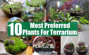 10 most preferred plants for terrarium diy home life