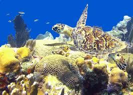 aqua marine discovery sea turtles