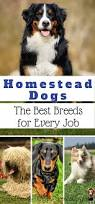 homestead dogs the best breeds for every job working dog breeds