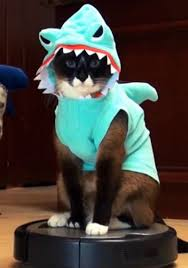 Cat Suit Meme - costumes for cats
