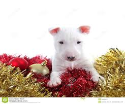 dog christmas ornaments australia best images collections hd for