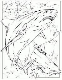 fashionable design shark coloring book 128 coloring pages