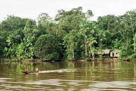 amazing amazonia amazon rainforest 46 pics