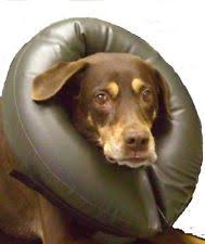 Buster Comfort Collar Inflatable Dog Collars Ebay