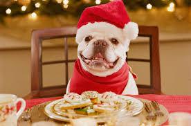dog christmas the king file christmas dog poems tax cuts