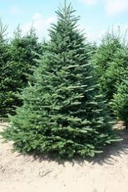know the christmas tree types in northwest arkansas