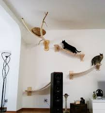 rooms transformed into overhead cat playgrounds with walkways and