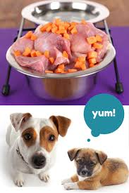 cuisine am icaine uip how to feed your puppy on food