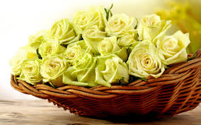 basket yellow roses 6998350