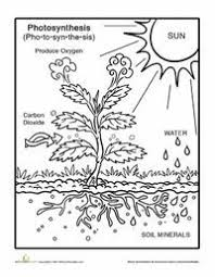 Photosynthesis Coloring Page Photosynthesis Worksheets And Plants Photosynthesis Coloring Page