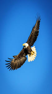 best 25 eagles ideas on pinterest bald eagle ice photo and