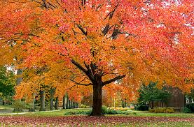 quiz tell us your favorite things about fall and we ll tell you
