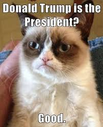 Evil Cat Meme - grumpy cat has an evil sense of humor lolcats lol cat memes