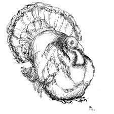 turkey drawings thanksgiving vector cartoon thanksgiving turkey holiday design drawing stock in