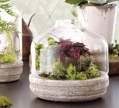 terrarium design amusing planting in glass containers growing