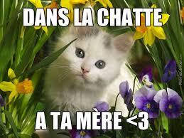 Mere Cat Meme - dans la chatte à ta mère by judgejuliet meme center