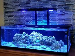 Floating Aquascape Reef2reef Saltwater And Reef Aquarium Forum - floating canopy ideas for 4 ft rimless page 2 reef2reef