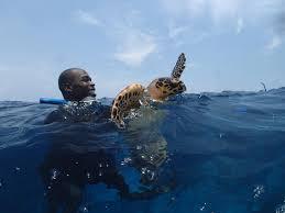 glover u0027s reef providing refuge for new generation of sea turtles