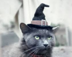 Pet Cat Halloween Costume Cat Halloween Costume Cat Costume Witch Hat Pet Costume