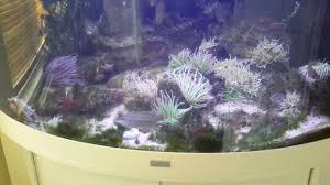 native uk pond plants uk native marine aquarium youtube