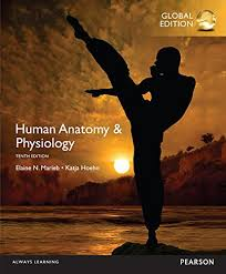 Anatomy And Physiology Pdf Books Essentials Of Human Anatomy U0026 Physiology 12th Edition Pdf Download