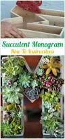 best 25 indoor succulent garden ideas on pinterest succulents