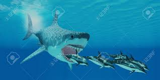 megalodon shark images u0026 stock pictures royalty free megalodon