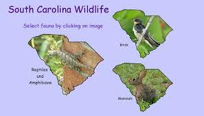 South Carolina wildlife images Sc_wildlife_index jpg jpg