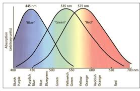 Blue Light Wavelength Why Does White Light Consist Of Many Different Wavelengths
