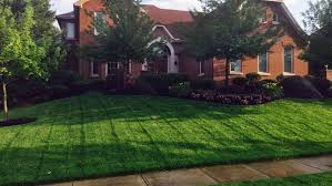 How Do You Spell Backyard How To Get A Lush Green Lawn Neighbors Will Envy Angie U0027s List