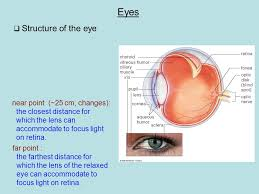 What Structure Of The Eye Focuses Light On The Retina Chapter 25 Optical Instruments Cameras Homework Assignment Read