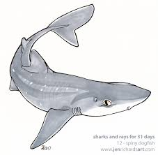 sharks and rays for 31 days the 31 jen richards