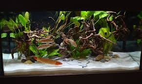 Aquarium Tropical Plants Freshwater Tanks Of The Aquatic Experience 2016 Part 2