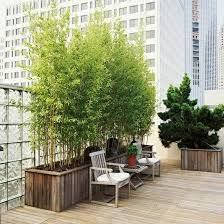 kletterpflanzen fã r balkon bambus pflanzen balkon ideen alles rund um den garten