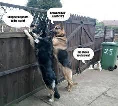 Funny Short People Memes - short people humor imgur