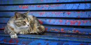 a gray homeless cat is lying on an old bench wallpapers and images