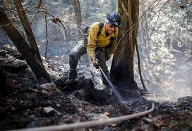 forestry crews prepared to miss thanksgiving with families as they