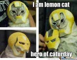 Caturday Meme - savior of caturday by totalcontradiction meme center