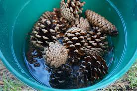pine cone holiday projects maggie may u0027s