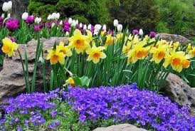 image of spring flowers flower garden pictures pictures of beautiful flower gardens