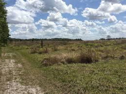 Clermont Florida Map by Best Trails Near Clermont Florida Alltrails Com
