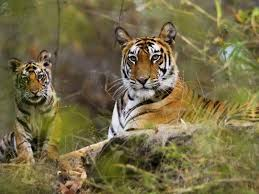 India nature and wildlife tours kvt award winning india