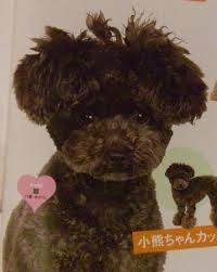 haircutsfordogs poodlemix poodle grooming styles poodles pinterest poodle dog and animal